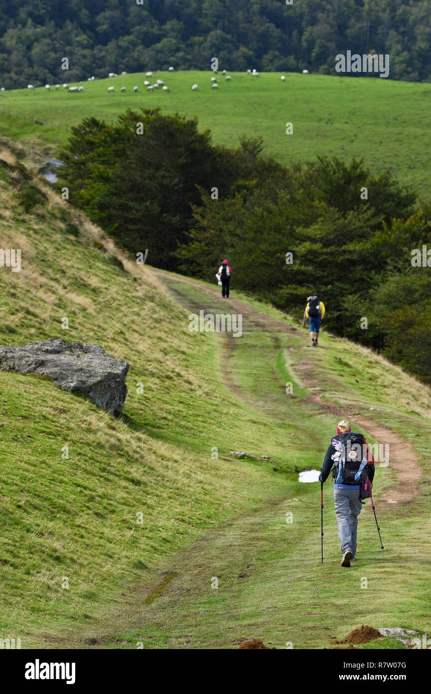France, Pyrenees Atlantiques, Basque Country, Camino de Santiago (the Way of St. James) on the GR 65 between Saint Jean Pied de Port and Roncesvalles, pilgrims on the slopes of the Leizar Atheka - Stock Image