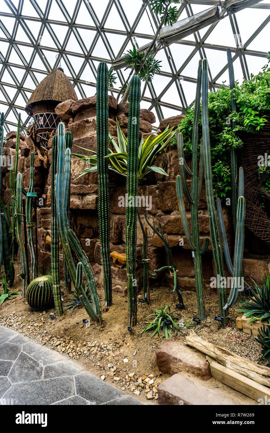 Admirable China Shanghai Botanical Garden Greenhouse Dry Desert Home Interior And Landscaping Oversignezvosmurscom