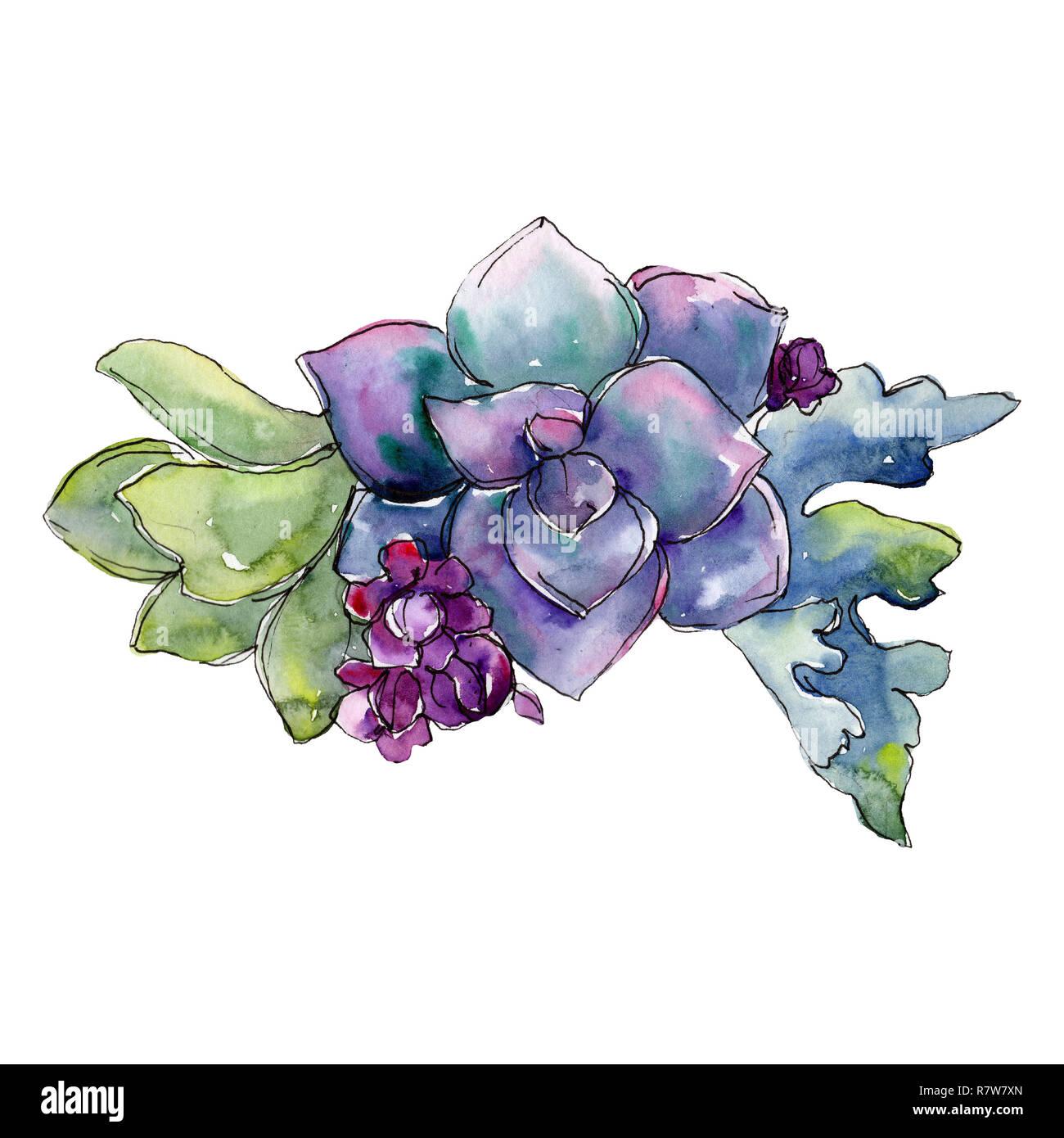 Purple Succulent Flower Bouquet Watercolor Background Illustration Set Watercolour Drawing Fashion Aquarelle Isolated Stock Photo Alamy