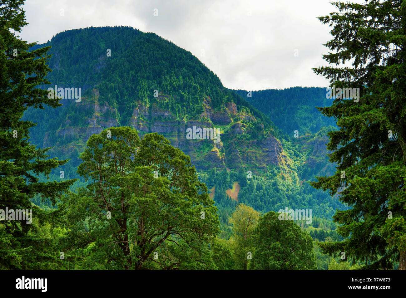 Majestic scene of the Oregon side of the Columbia River Gorge seen from Beacon Hill State Park - Stock Image