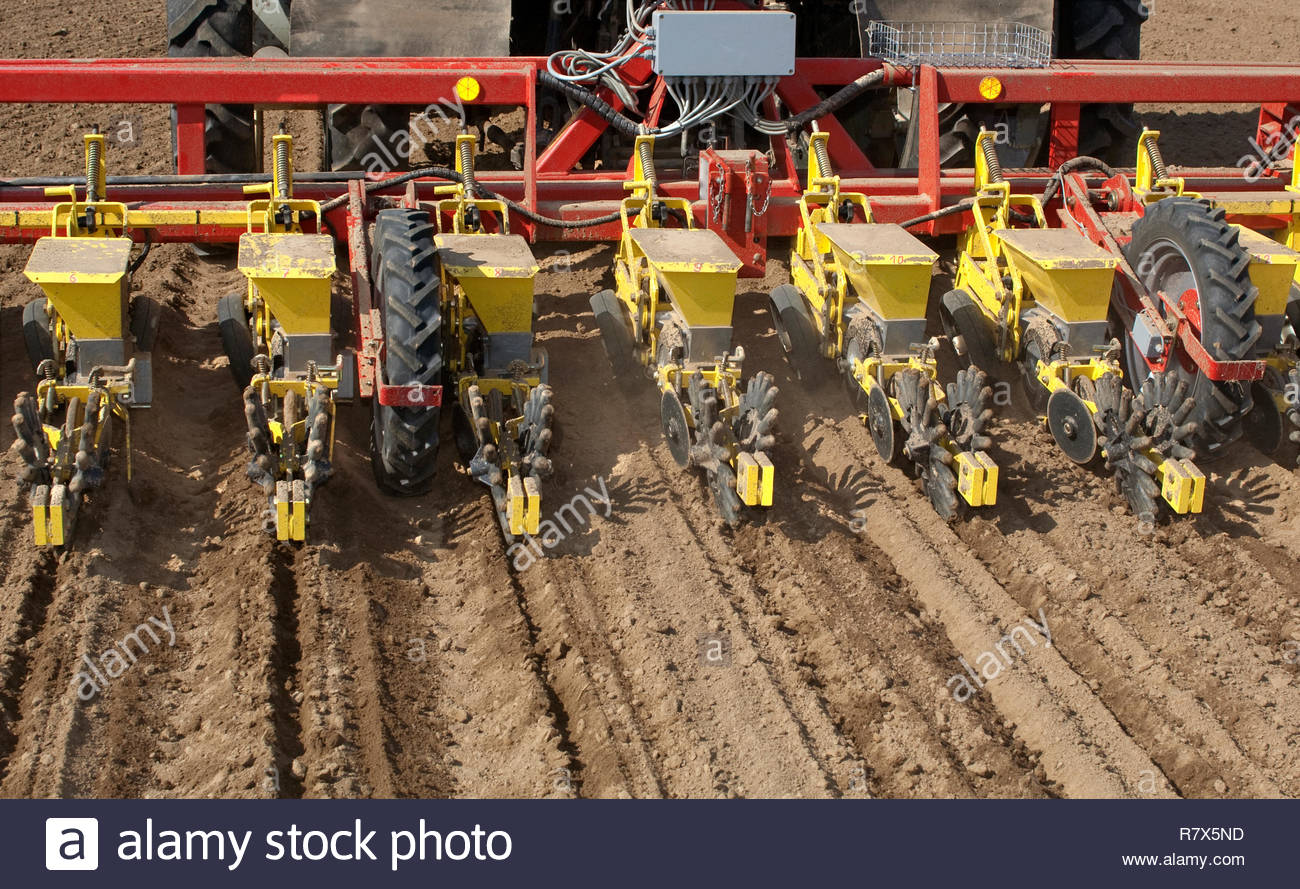 Sowing of beet by seeding machine. Rear view on machine. Stock Photo