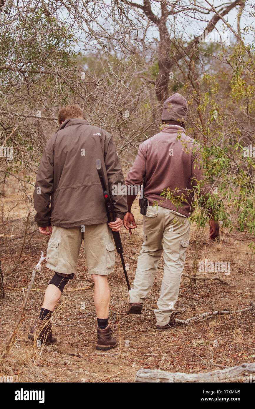 South Africa wildlife: tracker and ranger with gun following the drag marks left by a leopard dragging its kill - Stock Image