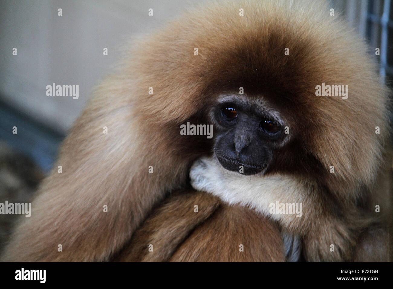 Sad monkey at the ZOO Stock Photo