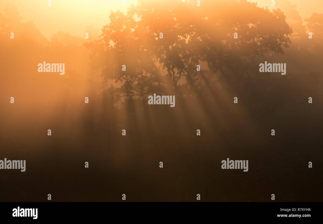 Foggy morning in Lüneburger Heide / Nebliger Morgen in der Lüneburger Heide - Stock Image