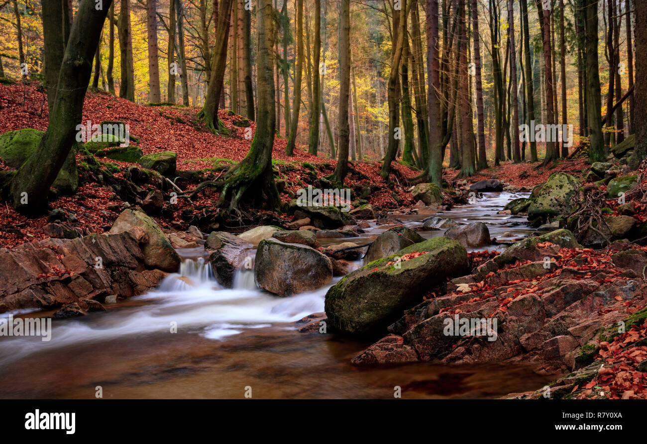 Cascading creek in Harz mountains in autumn / Harzer Ilse im Herbst - Stock Image