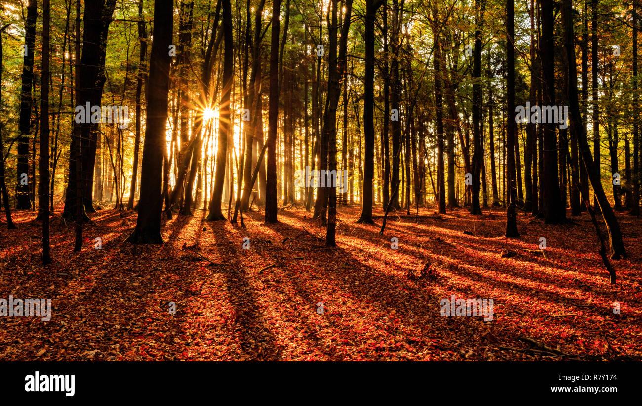 Rays of sun in german forest / Sonnenstrahlen in deutschem Wald - Stock Image