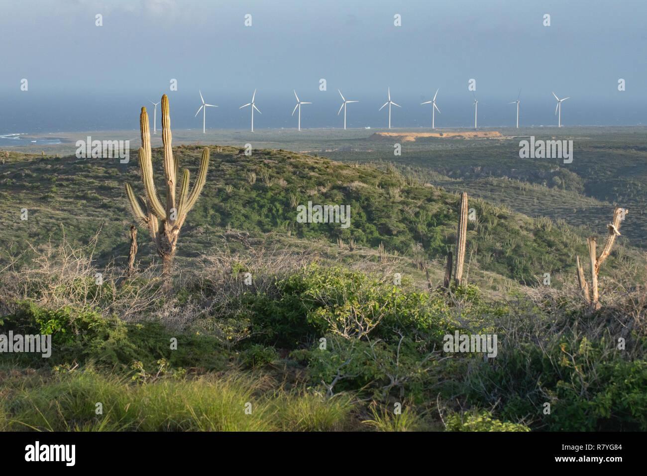 Windmill farm Aruba in Arikok National Park - sustainability effort from wind power - wind turbines form a wind farm to increase renewable energy - Stock Image