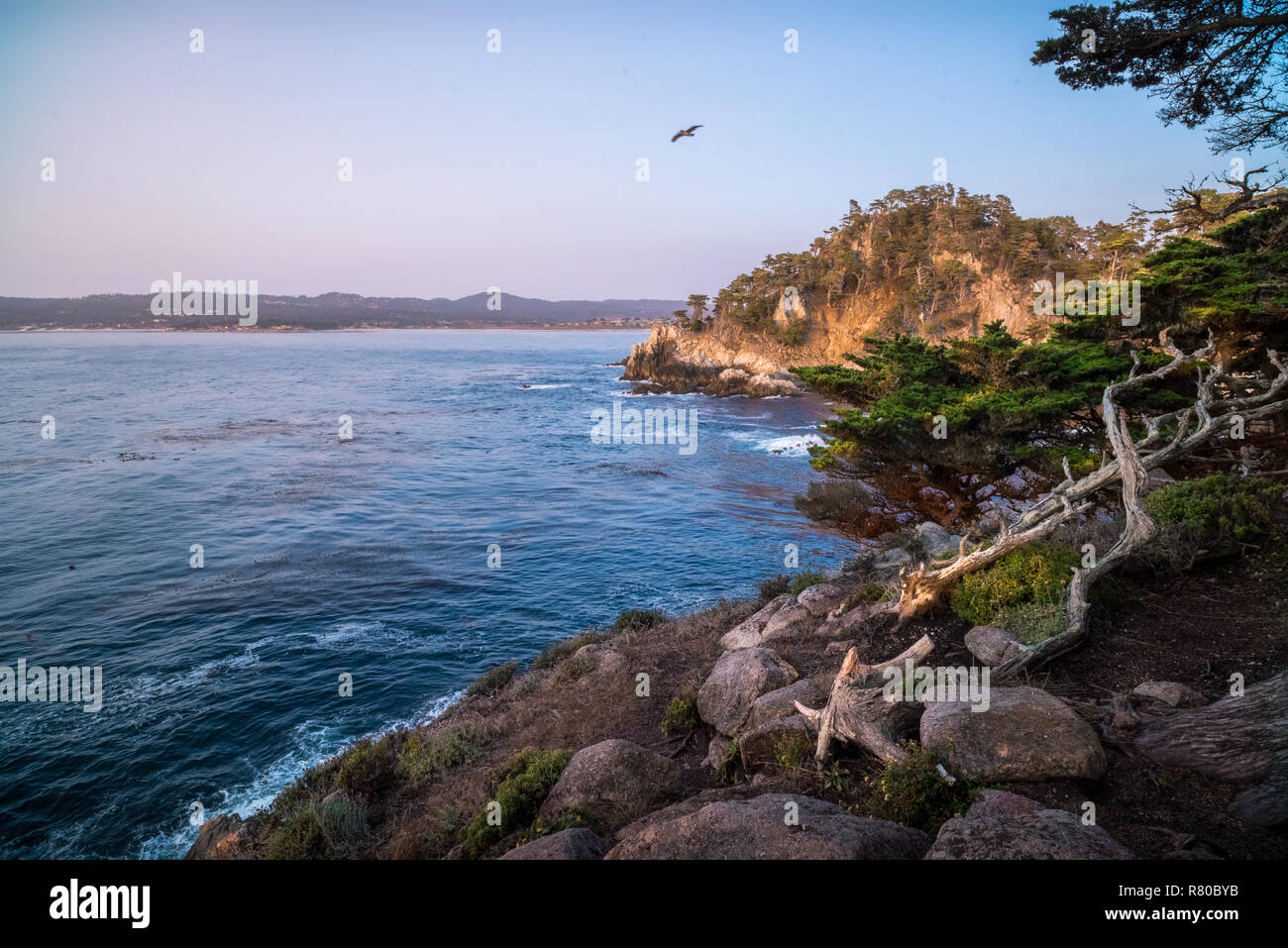 Point Lobos in Big Sur, California, including Morro Bay, McWay Falls, Bixby Creek, Pfieffer Beach, and Ragged Point - Stock Image