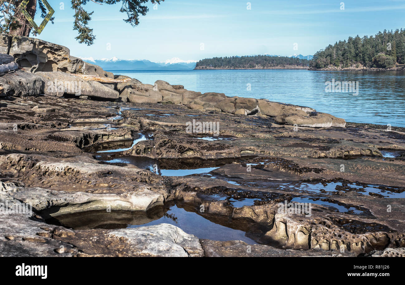 An eroded sandstone beach forms a network of rocky tidepools with a winter view of islands. sea and snow-capped peaks of British Columbia's mainland. - Stock Image