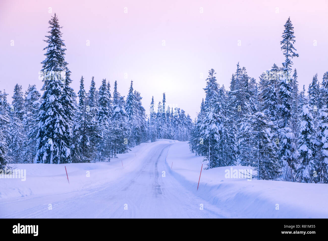 Winter road through the northern forest. Snow-covered spruces. Red landmarks marking the edges of the roadway - Stock Image