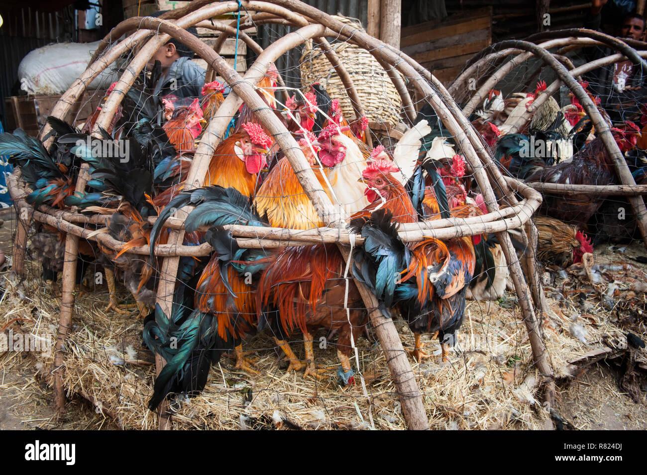 Chickens in a basket, market street scene, Mercato of Addis Ababa, Addis Ababa, Oromia Region, Ethiopia - Stock Image