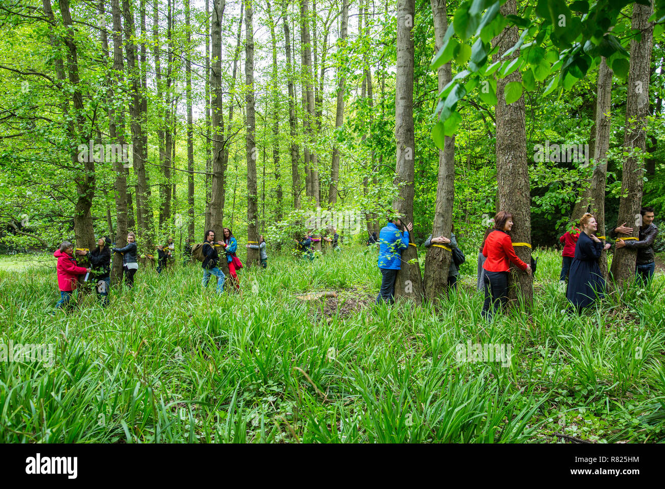 World record in tree hugging, initiative and record attempt of the WWF, 848 people hugged trees at the same time, Grugapark - Stock Image