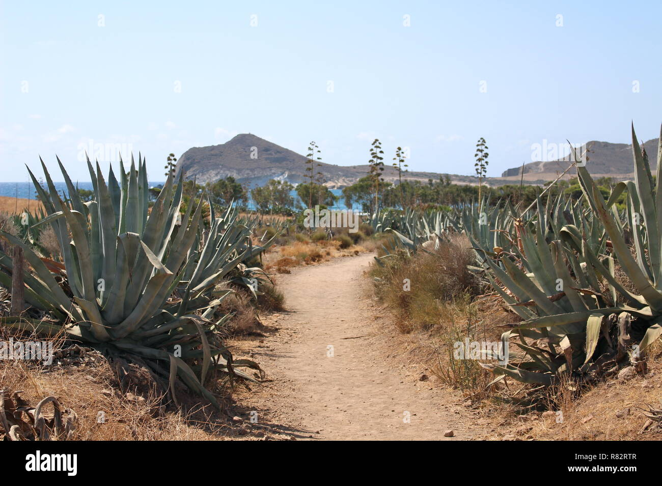 Desert path leading to beach - Stock Image