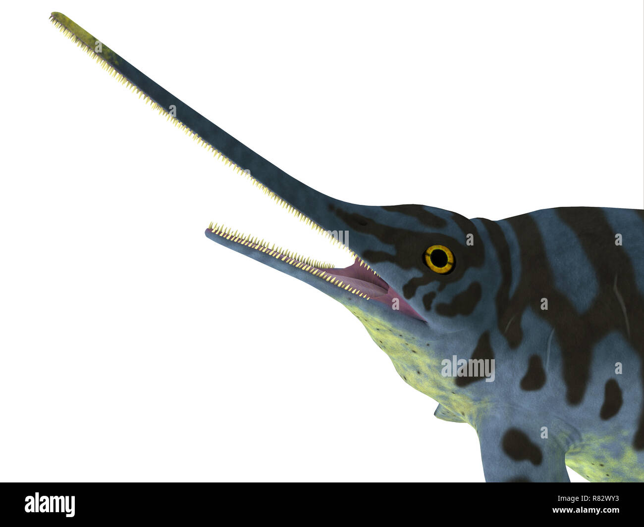 Eurhinosaurus Reptile Head - Eurhinosaurus was a carnivorous Ichthyosaur reptile that lived in Europe during the Jurassic Period. - Stock Image