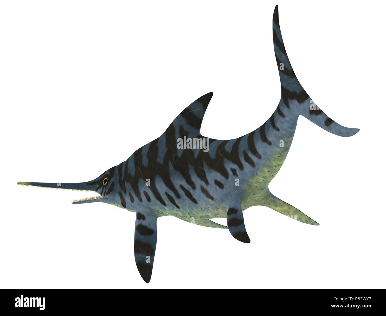 Eurhinosaurus Reptile Tail - Eurhinosaurus was a carnivorous Ichthyosaur reptile that lived in Europe during the Jurassic Period. - Stock Image