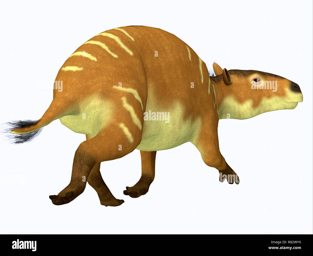 Eurohippus Horse Tail - Eurohippus was an early horse that lived in the Middle Eocene Period of Europe and Asia. - Stock Image