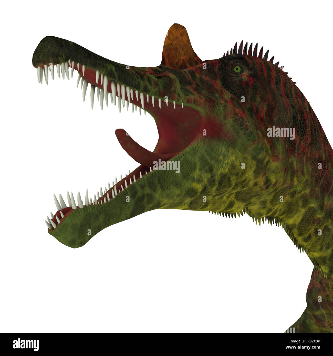 Ichthyovenator Dinosaur Jaws - Ichthyovenator was a carnivorous theropod dinosaur that lived in Laos, Asia during the Cretaceous Period. - Stock Image