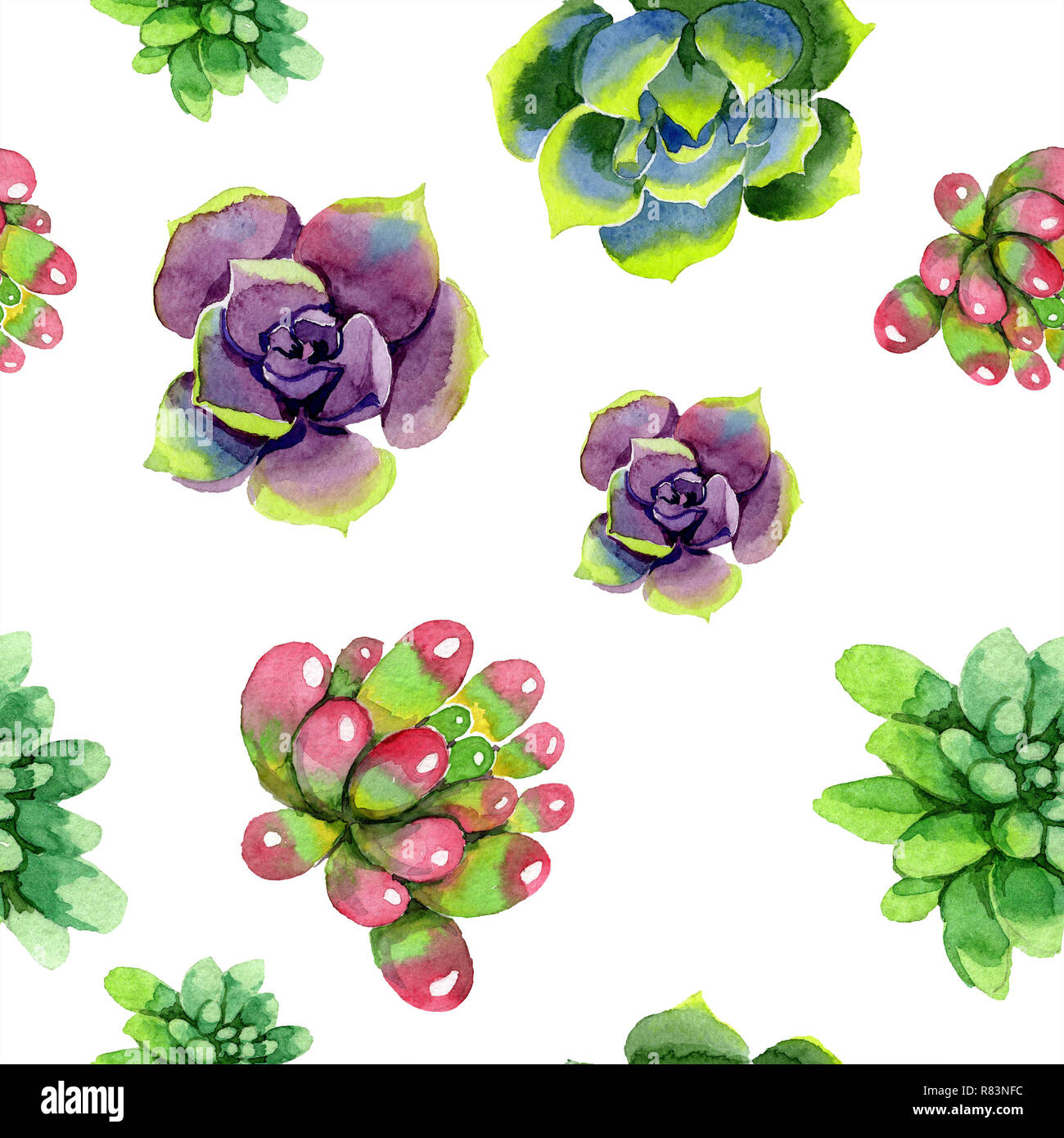 Amazing Succulent Floral Botanical Flower Watercolor