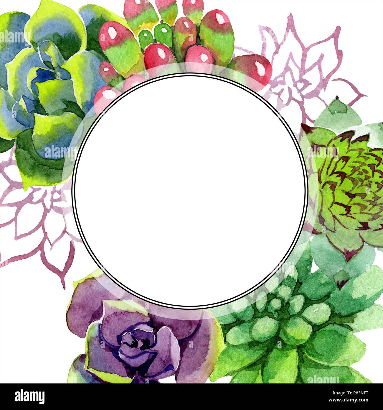 Amazing Succulent Floral Botanical Flower Watercolor Background Illustration Set Frame Border Ornament Round Aquarelle Hand Drawing Succulent Stock Photo Alamy