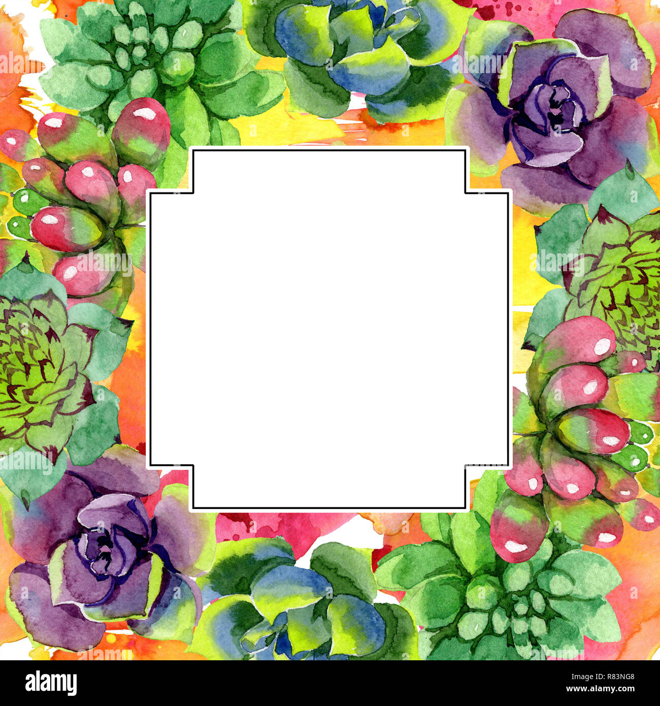 Amazing Succulent Floral Botanical Flower Watercolor Background Illustration Set Geometric Frame Square Aquarelle Hand Drawing Succulent Stock Photo Alamy