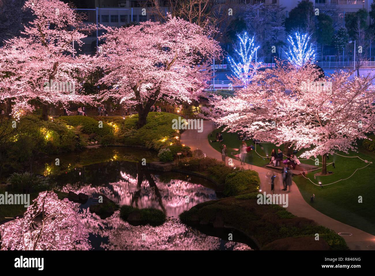 view of cherry blossoming at Mori Garden, Tokyo, Japan. Stock Photo