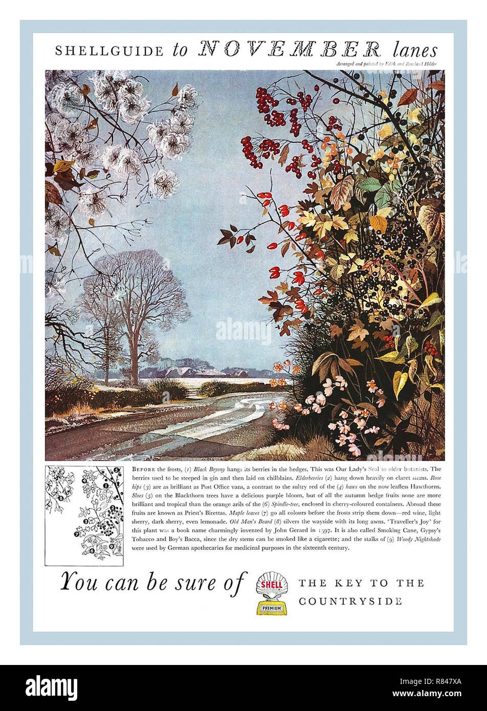 Vintage Press Advertisement 1950s Shell Oil Company advertising posters. NOVEMBER SHELL GUIDES AUTUMN adverts give a view of Britain as a lost rural idyl but they advertised not only petrol and oil but motoring in general and where it could take you – the exhilarating pleasure and joyous freedom of the countryside. - Stock Image