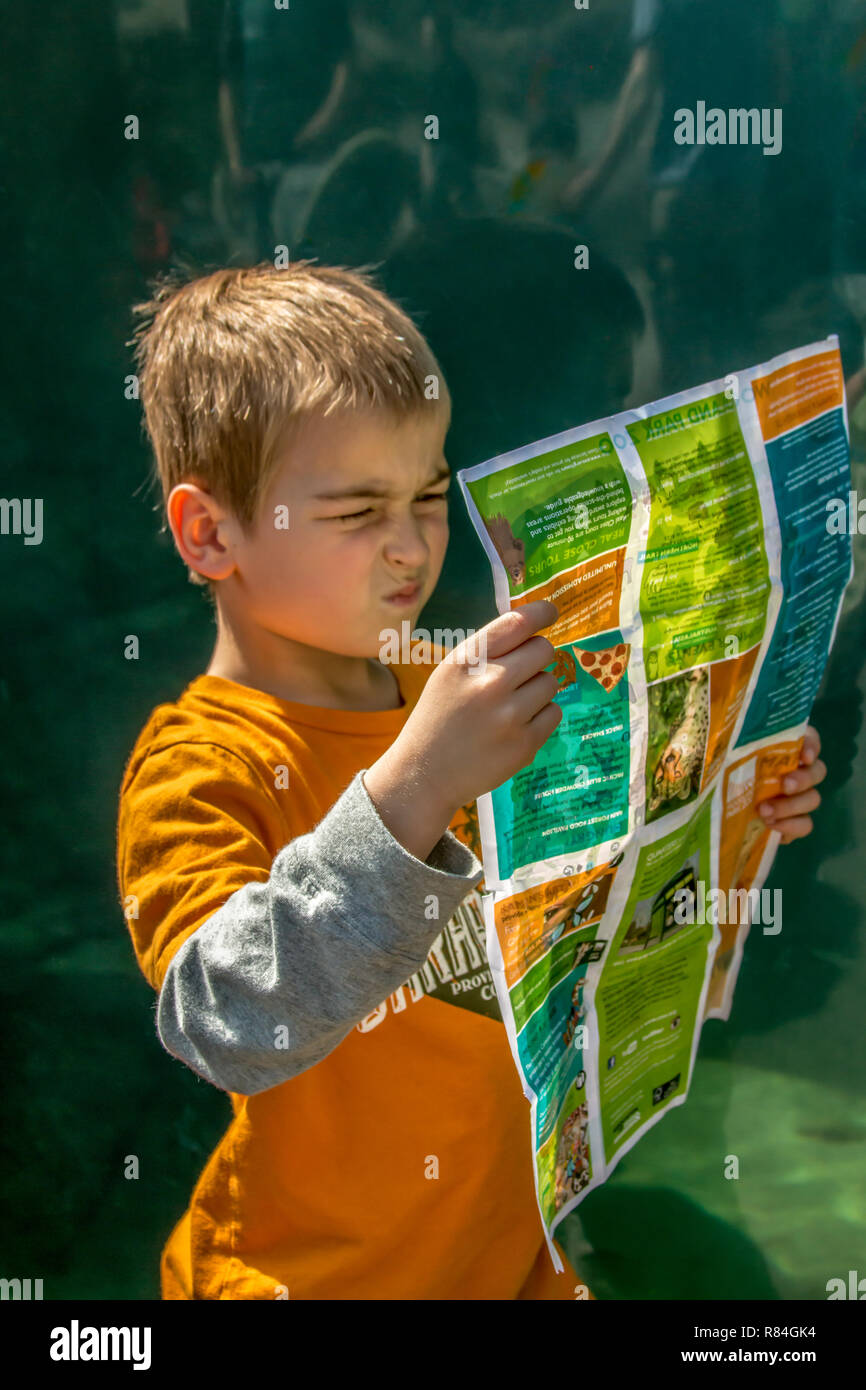 Seattle, Washington, USA.  Six year old boy looking very confused as he tries to figure out where he is on the map at Woodland Park Zoo.  (MR) Stock Photo