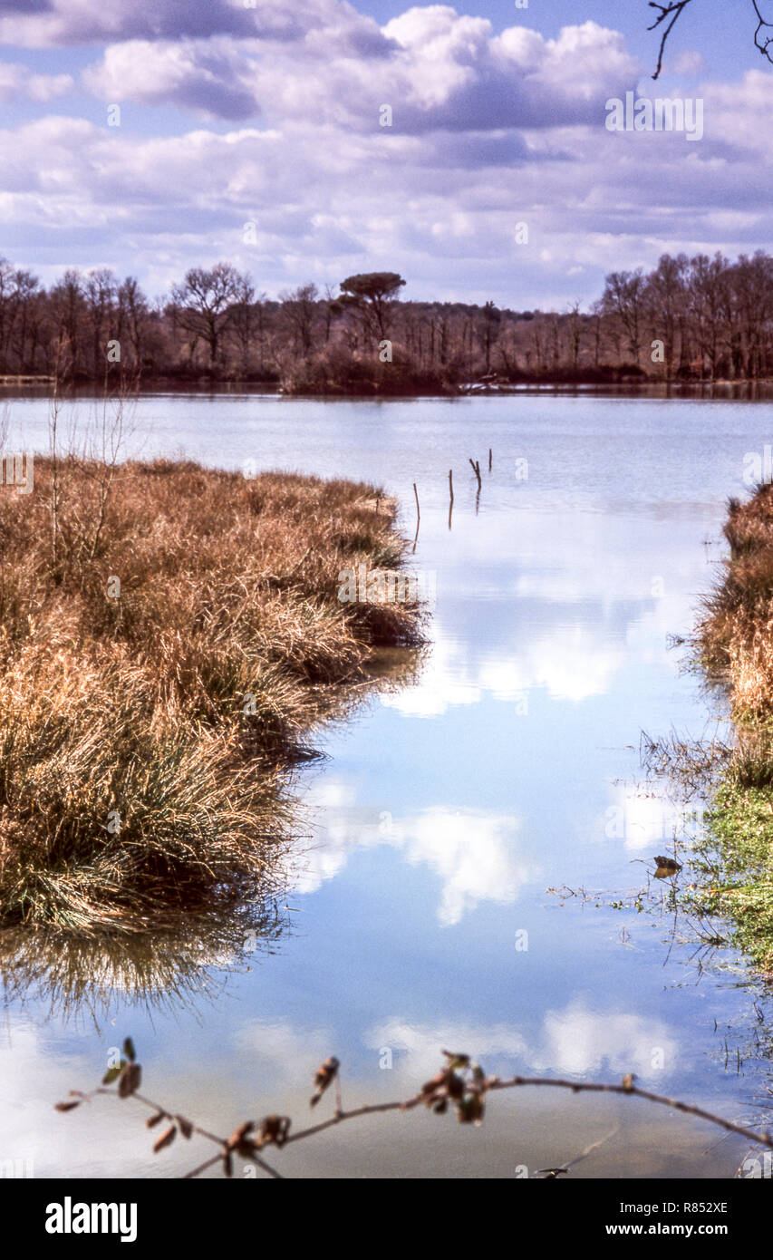 France.Dept.Gers. Lake of Moura near the village of Espas.. - Stock Image