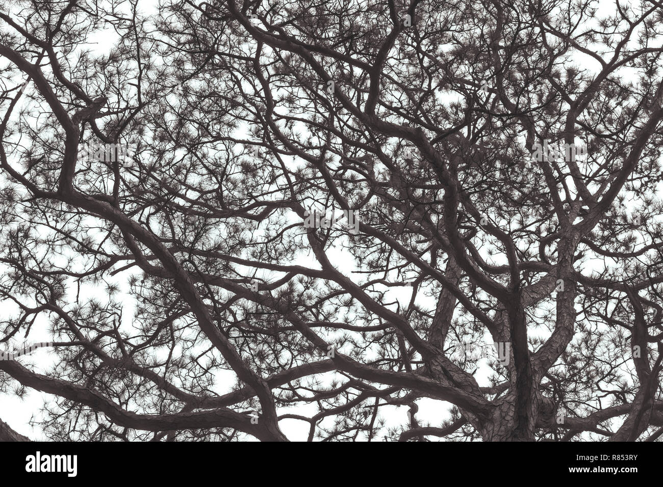 Abstract network of tree branches and leaves against a bright sky - Stock Image