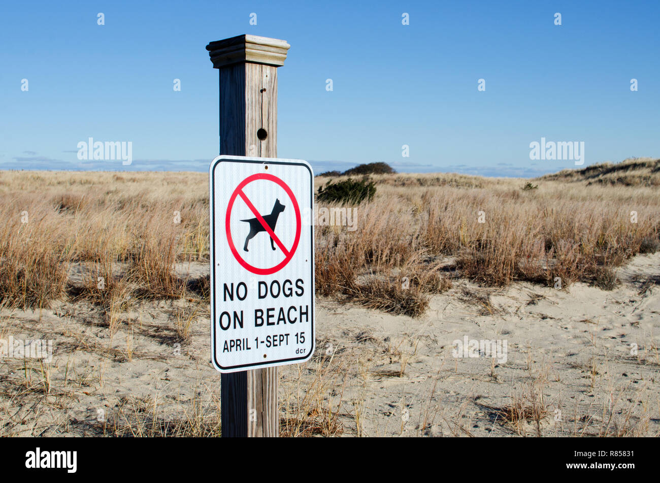 No dogs on beach sign posted by dunes at Scusset Beach, Cape Cod in Sagamore, Bourne, Massachusetts, USA Stock Photo
