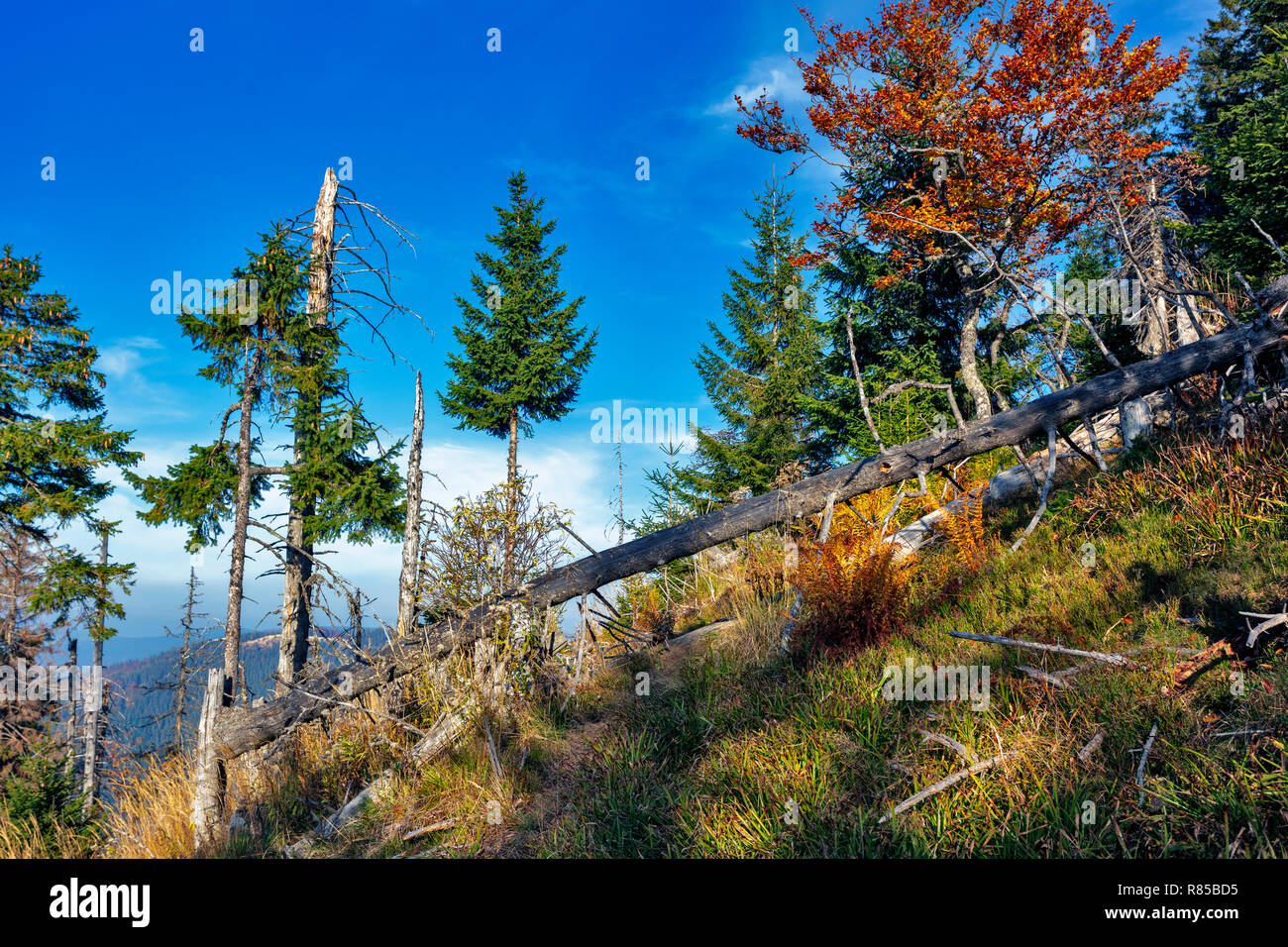 Deadwood in the spell forest - Stock Image