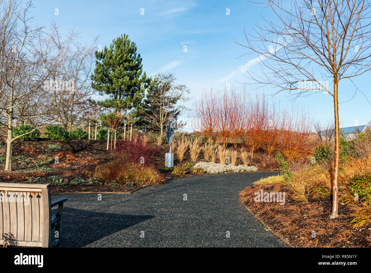 The winter garden at RHS  Hyde Hall. Pathway through the Royal Horticultural Society's winter garden. Stock Photo