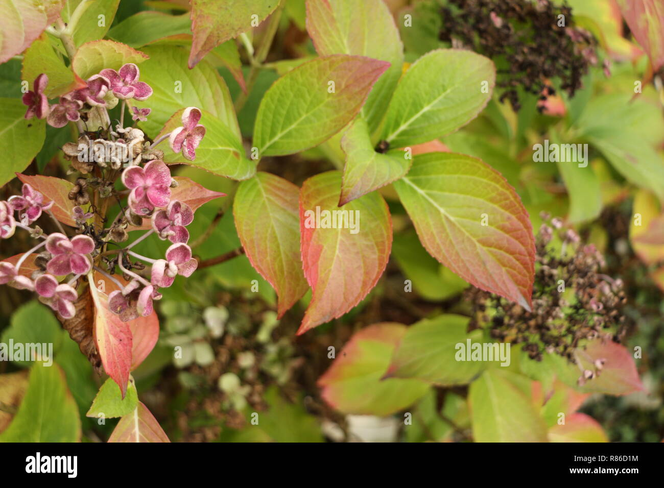 Herbst im Garten - Stock Image