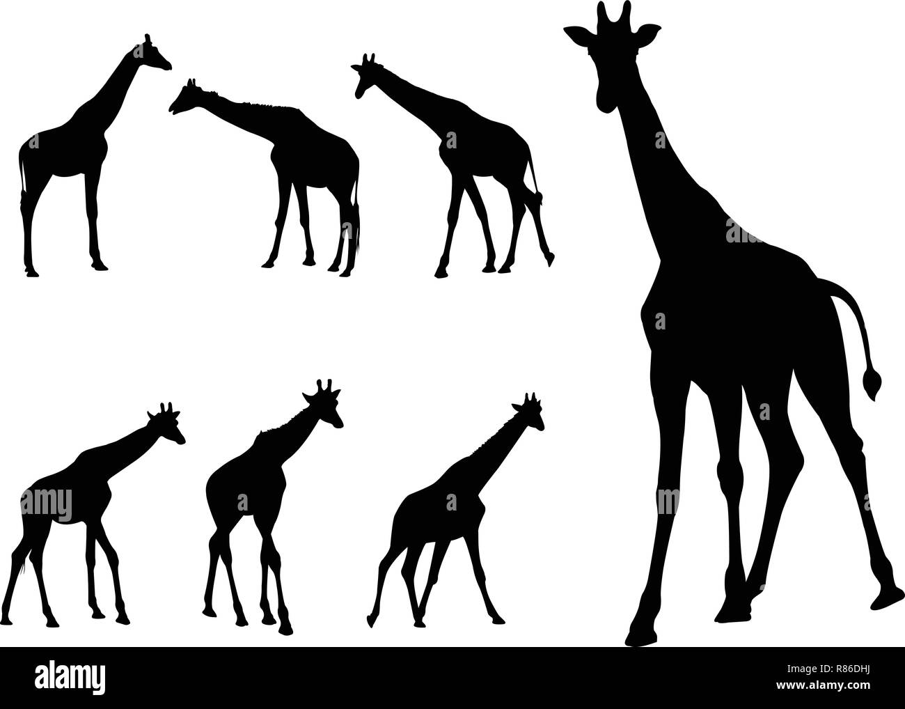 giraffes silhouettes collection - vector - Stock Image