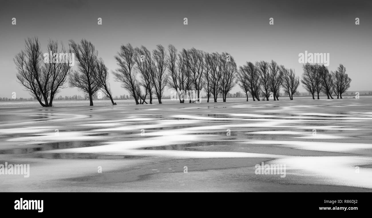 Frozen floodwater, Biebrza Marshes, Poland Stock Photo
