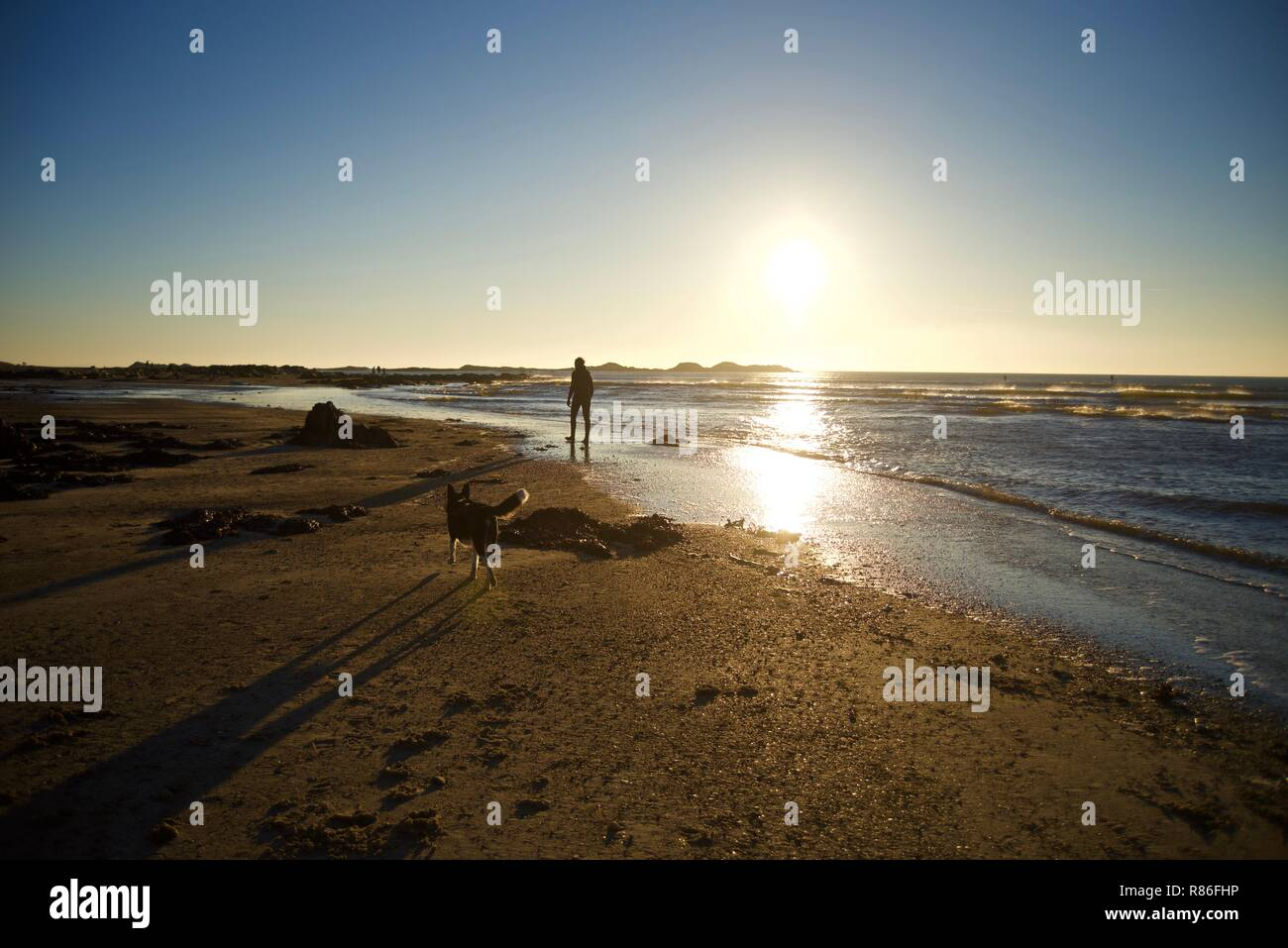 A man and his dog walking on the beach at sunset in Rhosneigr, Anglesey, Wales, UK - Stock Image