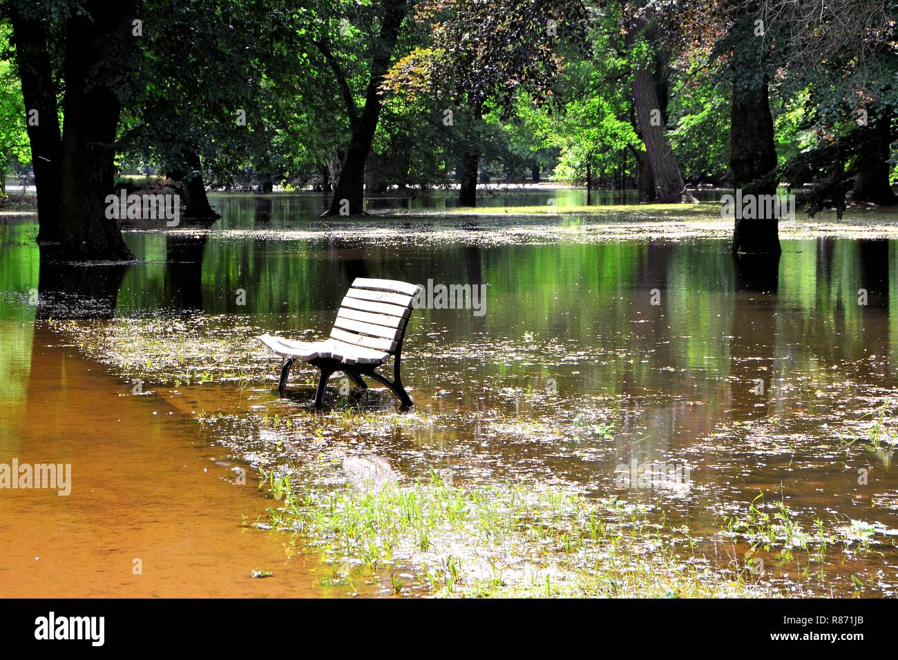 Flooded park during the flood in Magdeburg Stock Photo