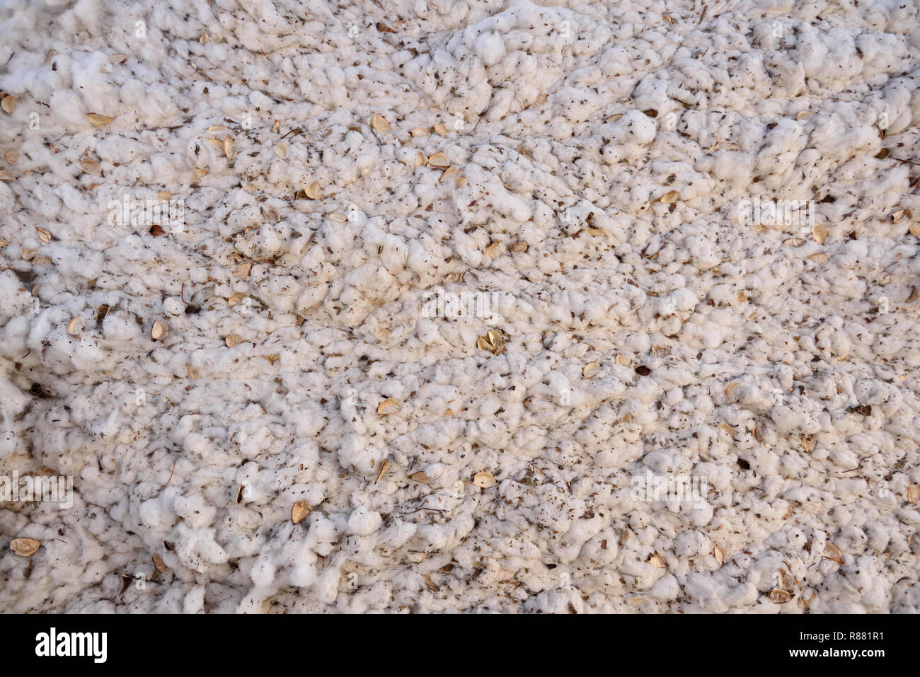 Freshly harvested bale of raw white cotton ready for processing in rural West Texas/ USA. - Stock Image