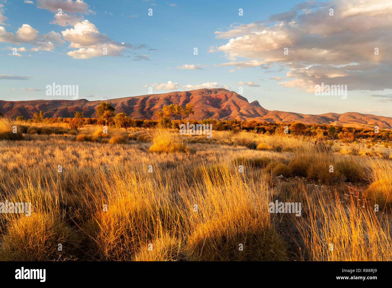 Wild MacDonnell Ranges and Spinfex in evening light. - Stock Image