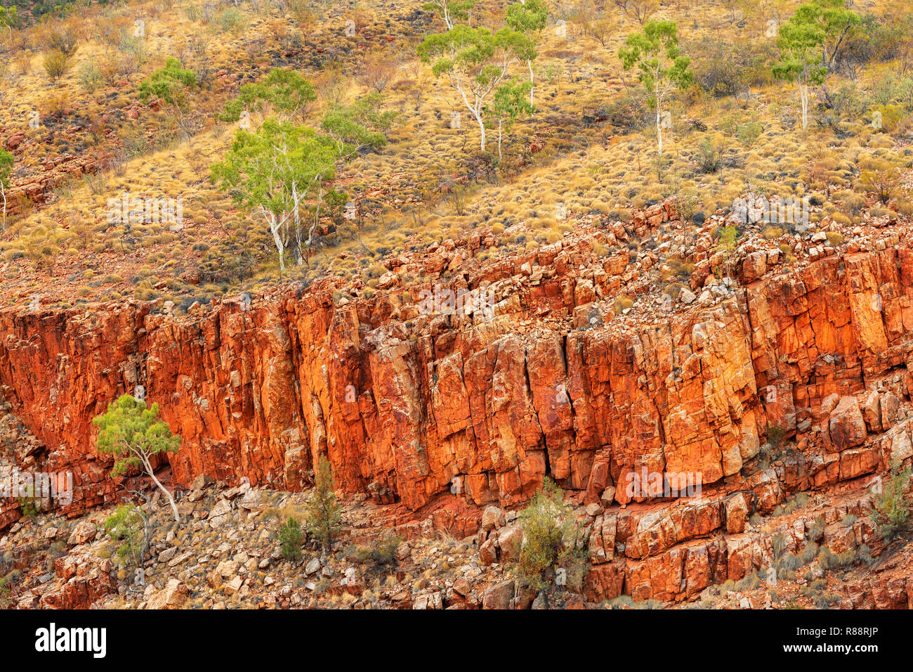 Rugged cliffs and Ghost Gums in Ormiston Gorge. - Stock Image