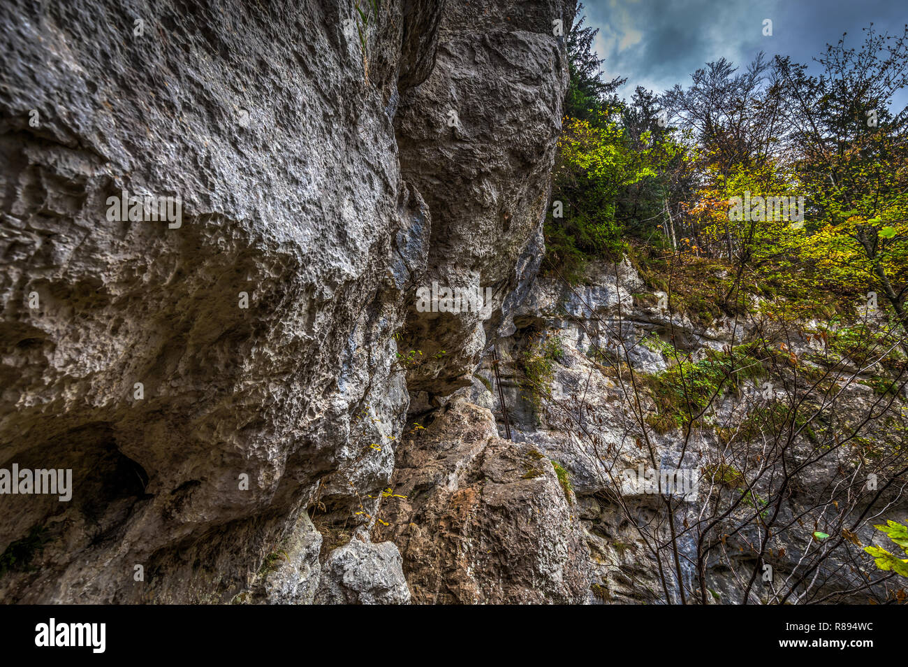 Metal ladder on via ferrata route Rudolf Decker Steig in Steinwandklamm, lower Austria - Stock Image