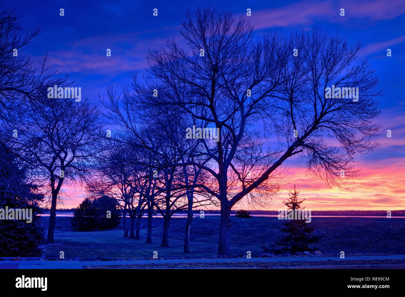 Green Ash trees in silhouette at early sunrise with colorful clouds in the background. - Stock Image