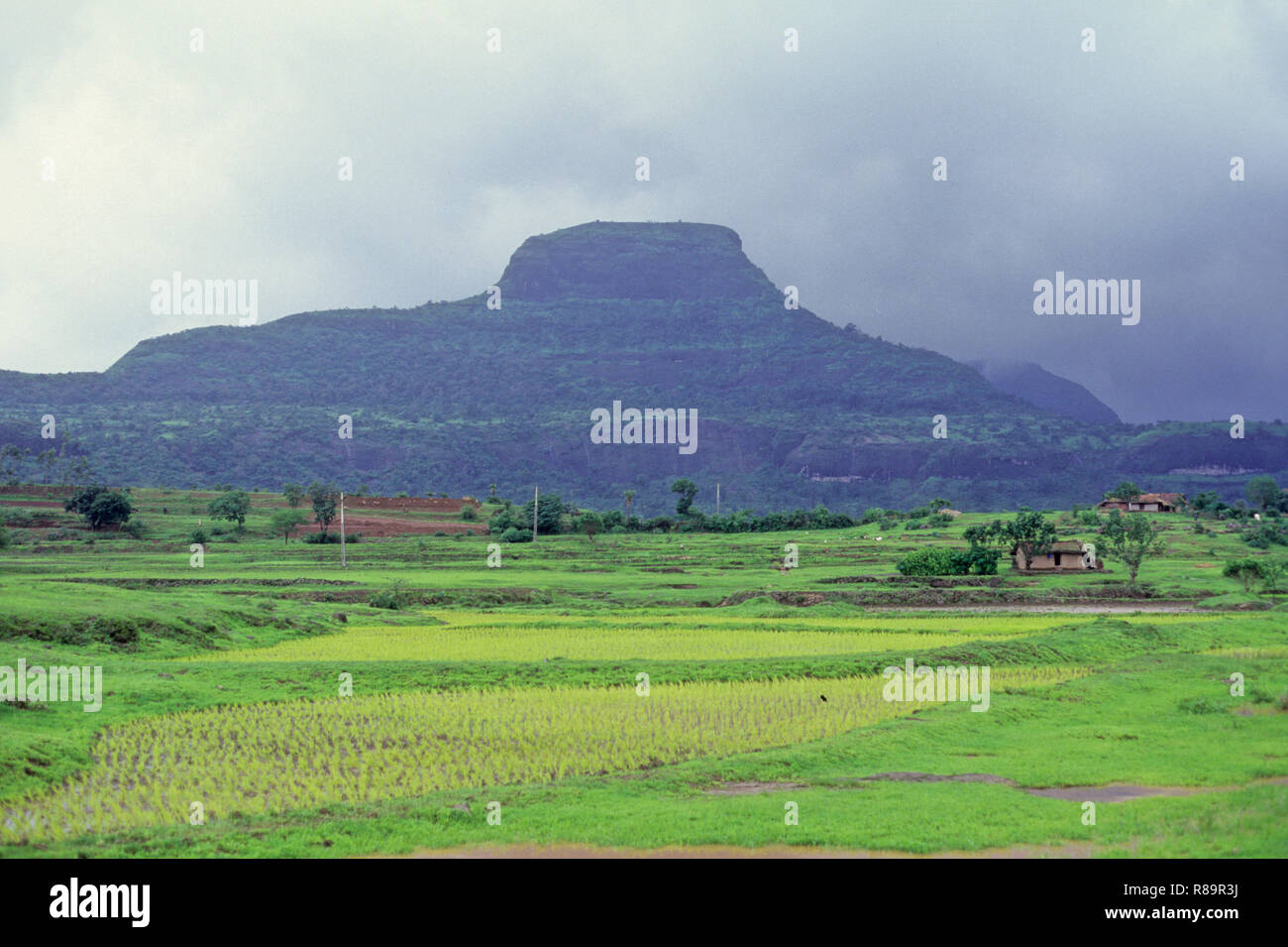 Greenery, malshej, maharashtra, india - Stock Image