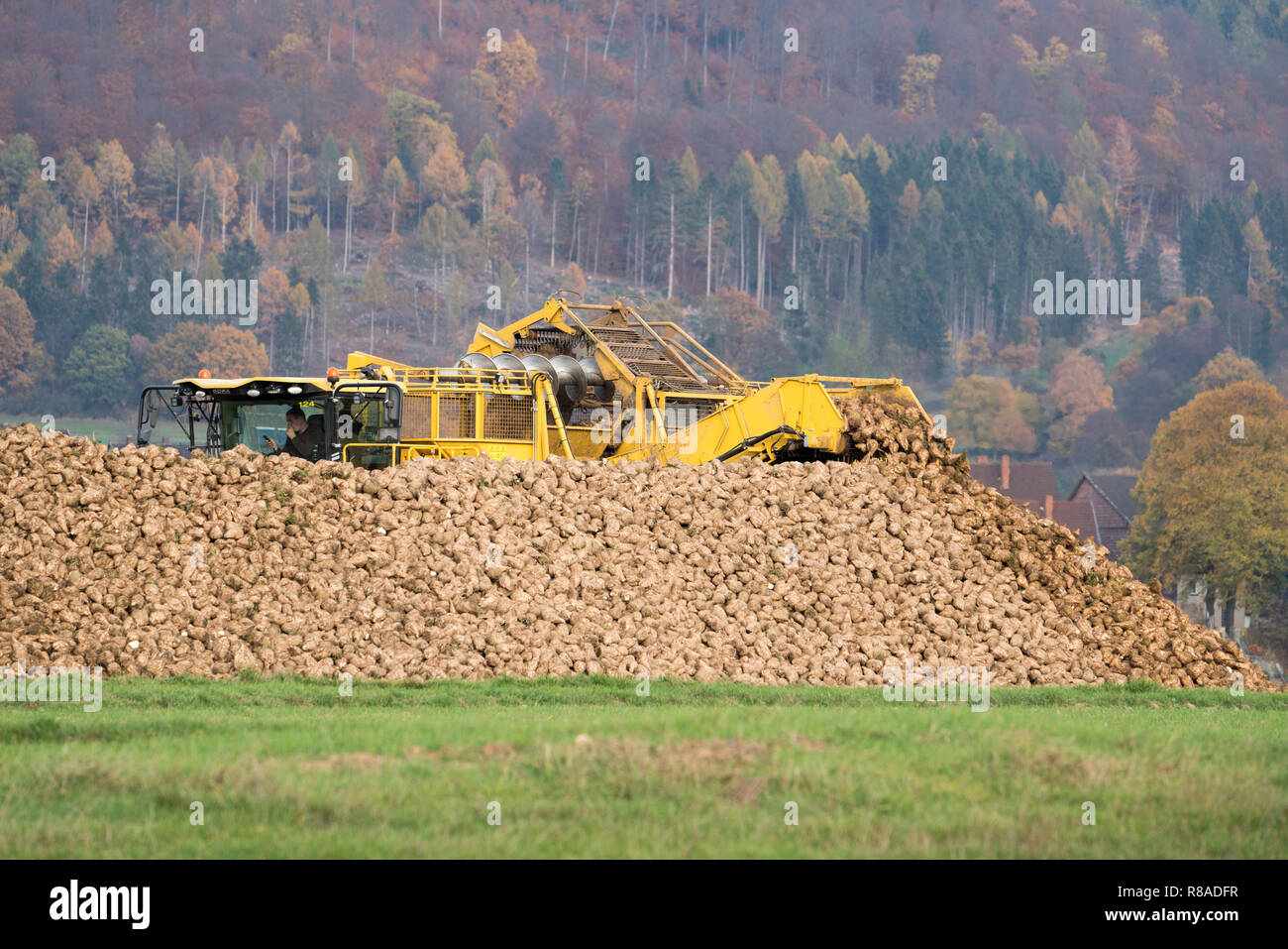 A Sugarbeet harvester, near Oberweser, Upper Weser Valley,  Weser Uplands, Weserbergland, Hesse, Germany Stock Photo