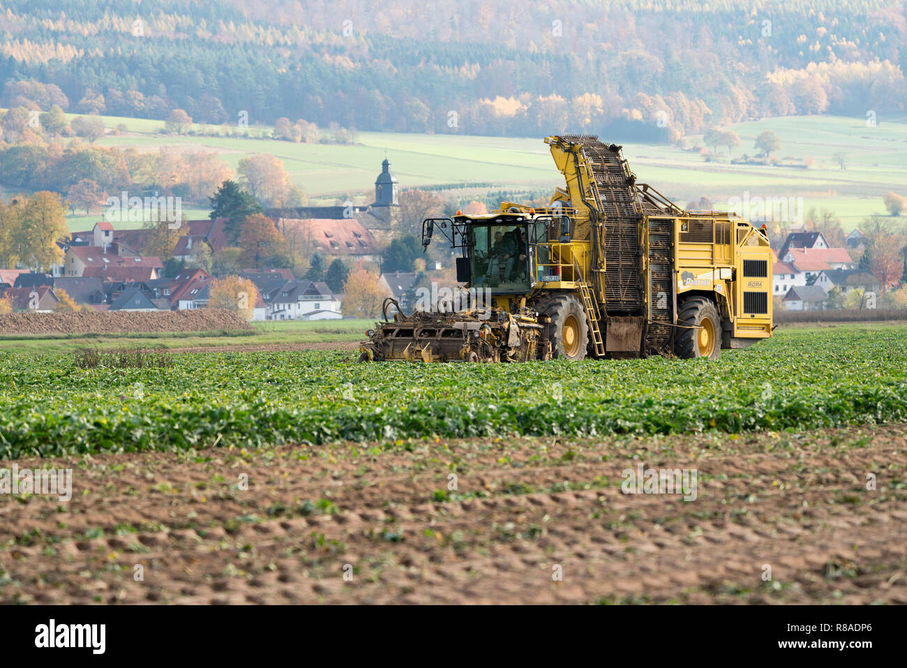 A Sugarbeet harvester, near Oberweser, Upper Weser Valley,  Weser Uplands, Weserbergland, Hesse, Germany Stock Photo
