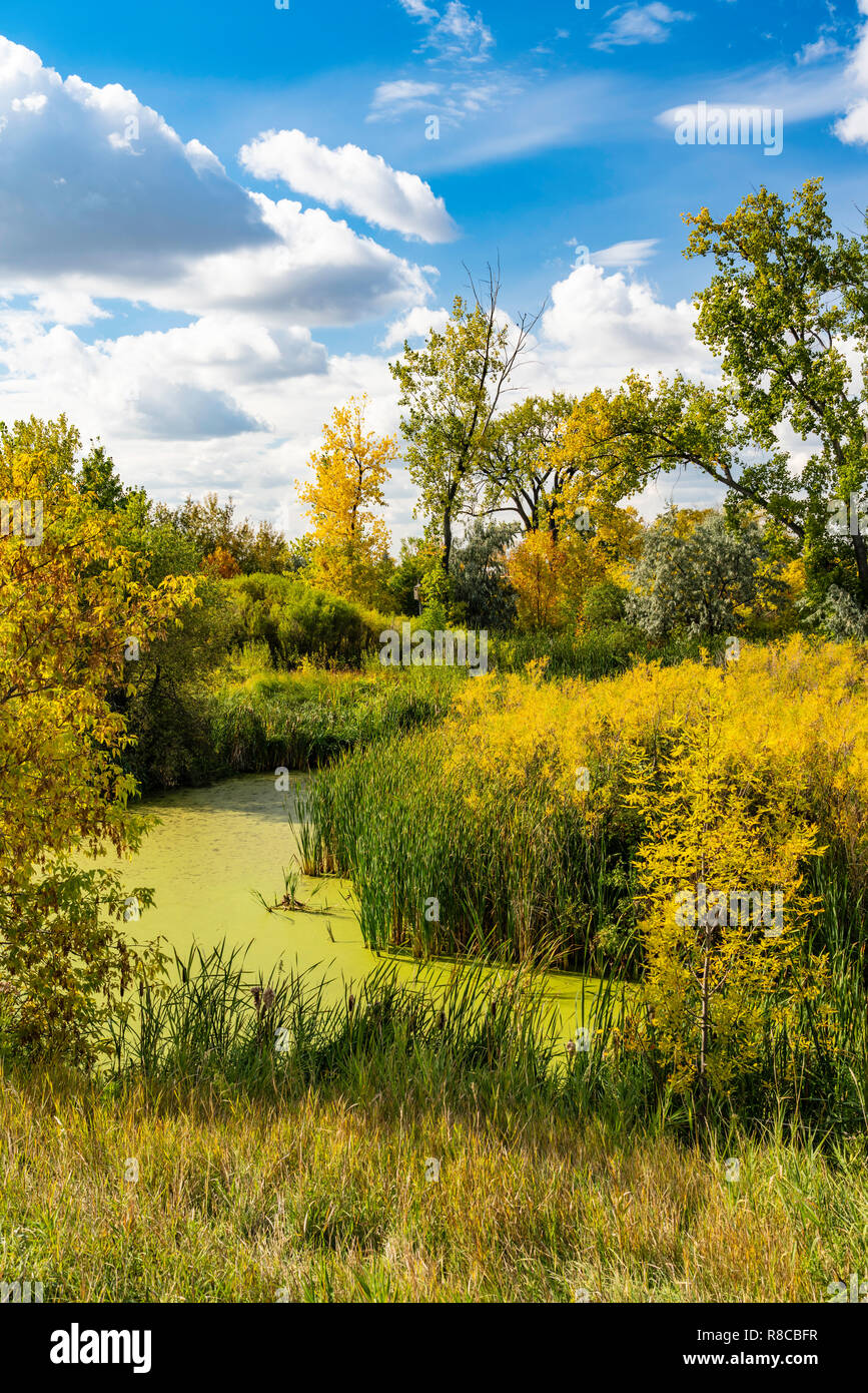 Fall foliage color at the Discovery Nature Center in Winkler, Manitoba, Canada. - Stock Image
