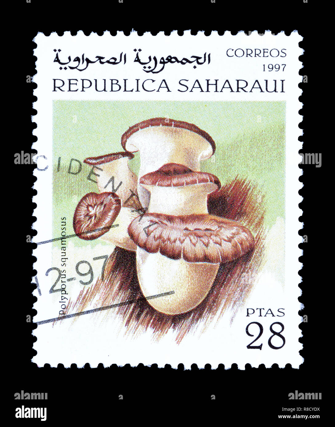 Cancelled postage stamp printed by Sahrawi Republic, that shows mushroom. - Stock Image