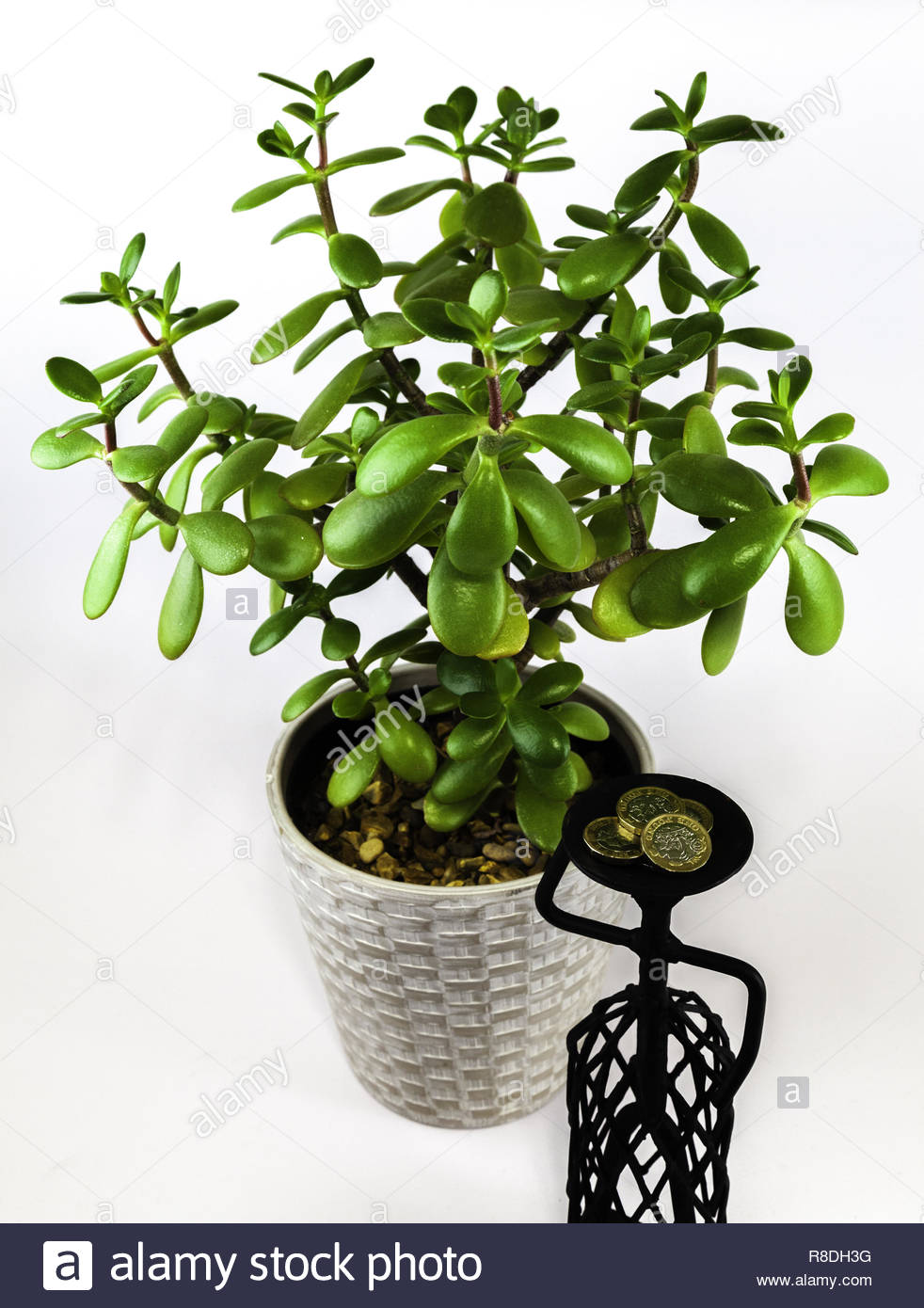 Jade plant Crassula portulaca (money tree) next to a metal female figure carrying pound (GB£) coins on her head. Concept: the value of women's labour - Stock Image