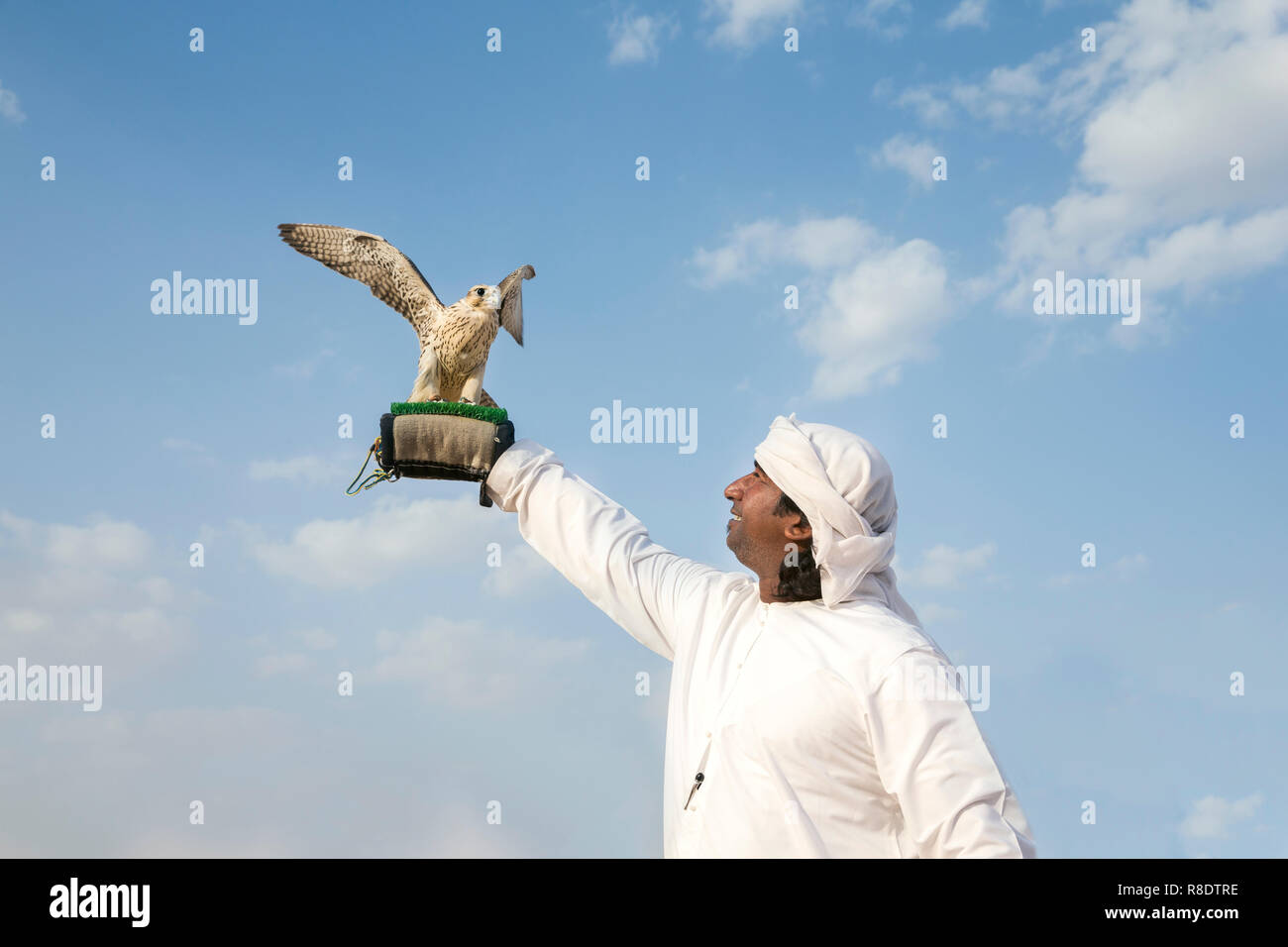 abu Dhabi, United Arab Emirates, 15th December 2017: Emirati man training his falcon Stock Photo