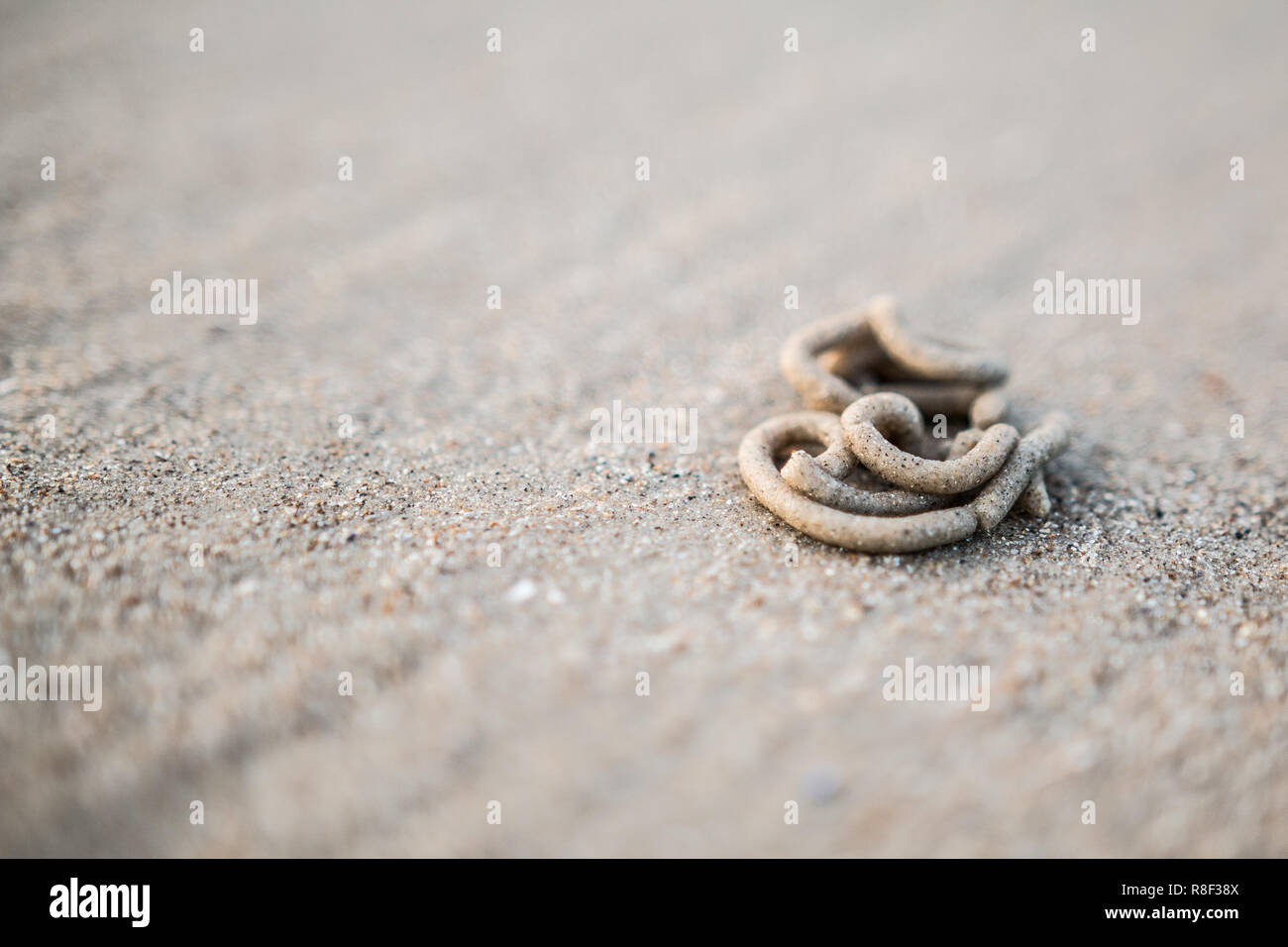 Close up of a lugworm cast in the sand on a beach - Stock Image